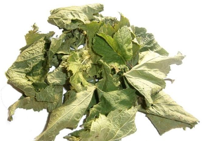 Листья малины и смородины - приготовление и применение с пользой для здоровья