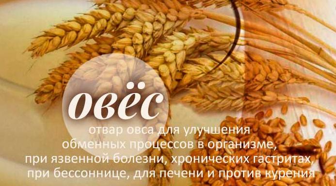 Отвар овса - обзор лечебных свойств и противопоказаний для организма