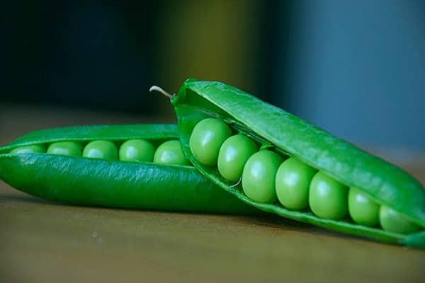 Польза вареного гороха и возможный вред продукта