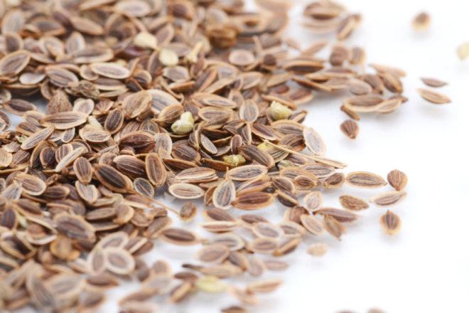 Лечебные свойства семян укропа для здоровья и возможные противопоказания