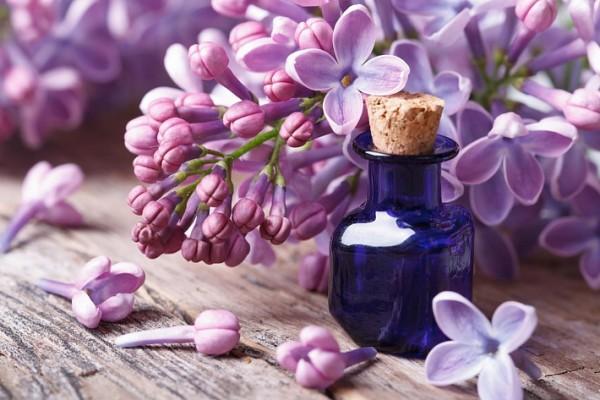 Настойка из цветков сирени для лечения в домашних условиях