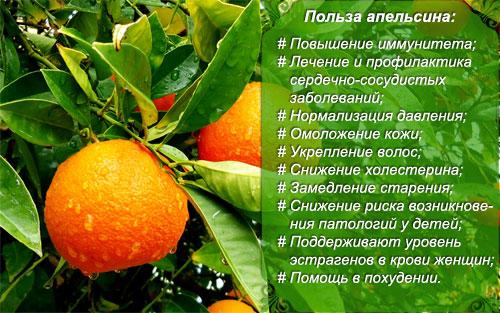 Польза апельсинов для организма, лечебные свойства и противопоказания