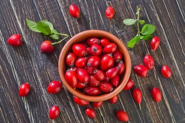 Корень шиповника - польза растения для лечения народными методами