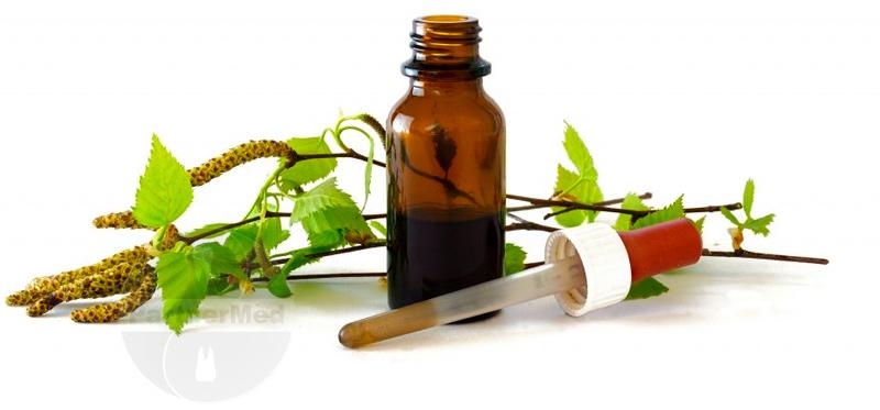 Листья березы - сбор, состав и польза в народной медицине