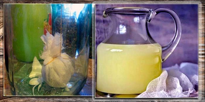 Квас из чистотела - польза растения и лечебные свойства применения внутрь, наружно или для ингаляций