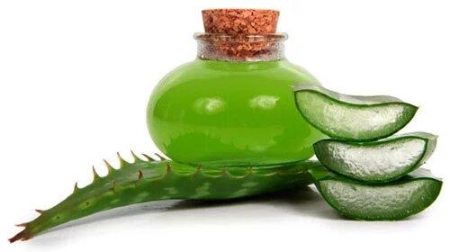 Польза настойки алоэ для организма, приготовление в домашних условиях