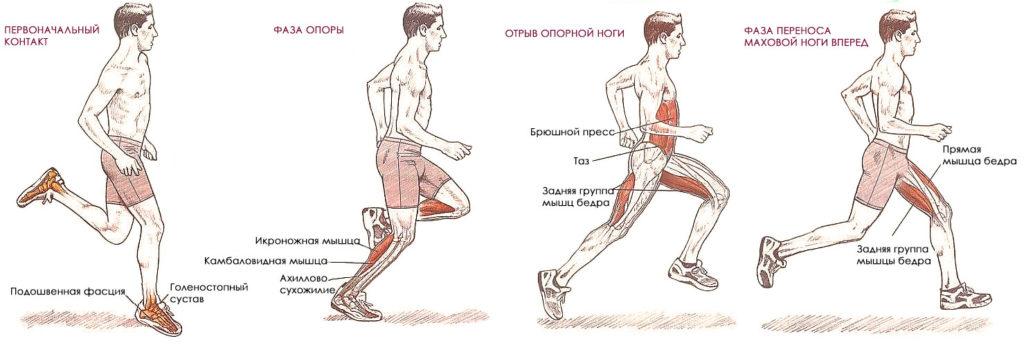 Техника и особенности оздоровительного бега, экипировка и питание