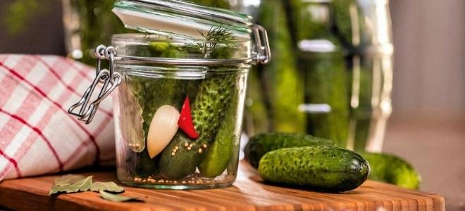 Малосольные огурцы на минералке и газировке - способы засолки и рецепты зимней консервации