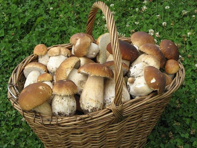 Жареная картошка с белыми грибами на сковороде: проверенные рецепты