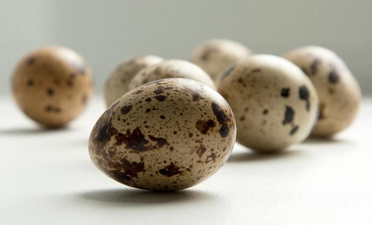 Как сварить перепелиные яйца вкрутую: особенности
